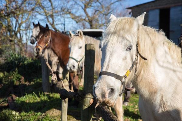 14 paarden