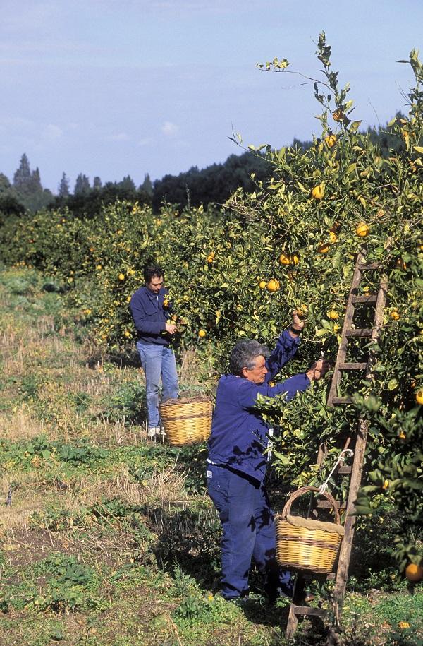 Azienda-Agricola-San-Giuliano-Sicilie (1)