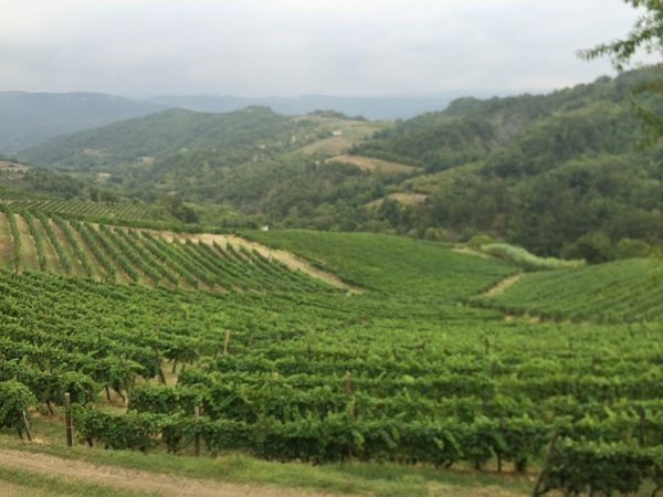 Cascina-Bertolotto-wijn-proeven-Piemonte (2)