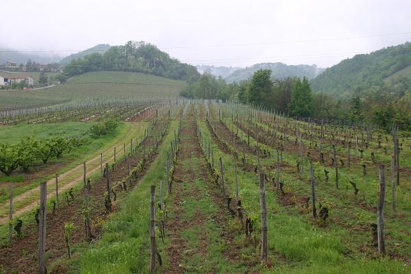 Cascina-Pastore-Colombo-wijn-proeven-Piemonte (4)