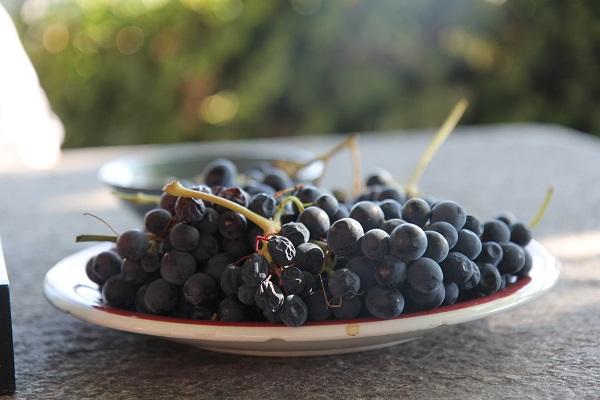 Cascina- Sant-Eufemia-wijn-proeven-Piemonte (4)