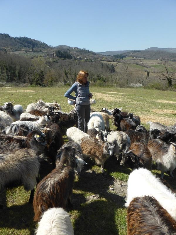 Chianti-Cashmere-geiten-kasjmier-Toscane (12)