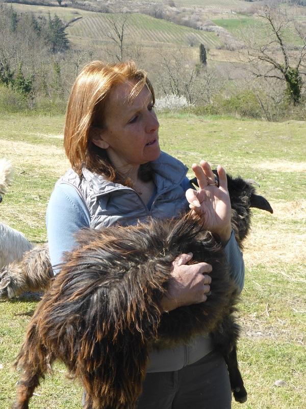 Chianti-Cashmere-geiten-kasjmier-Toscane (16)