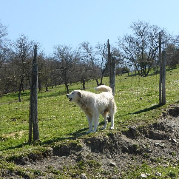 Chianti-Cashmere-geiten-kasjmier-Toscane (20)