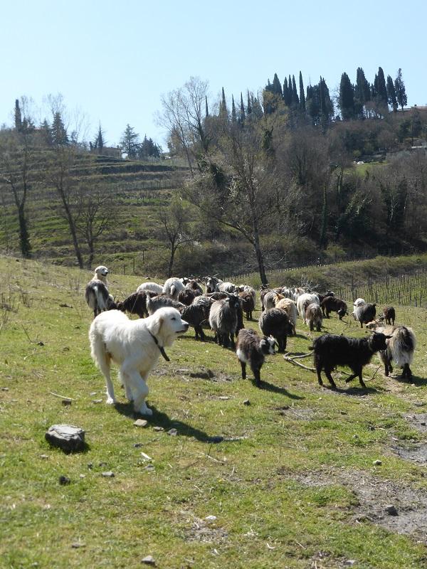 Chianti-Cashmere-geiten-kasjmier-Toscane (22)