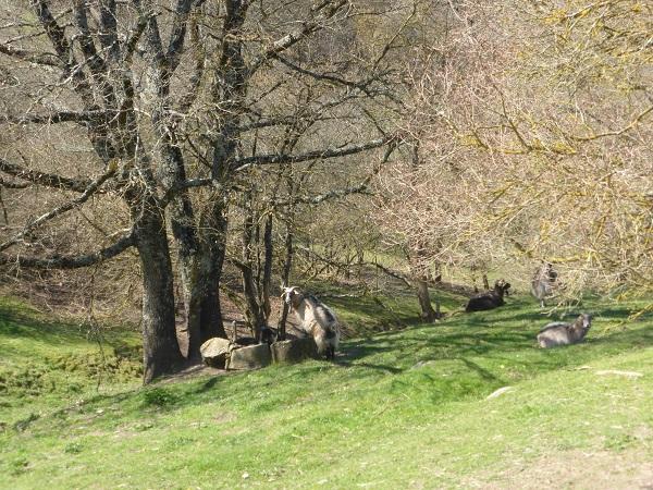 Chianti-Cashmere-geiten-kasjmier-Toscane (29)