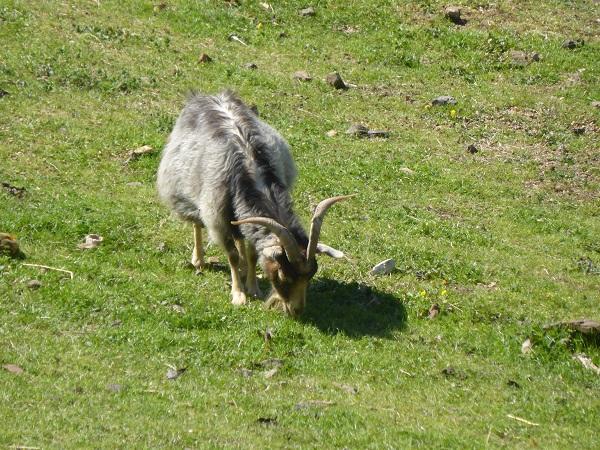 Chianti-Cashmere-geiten-kasjmier-Toscane (31)