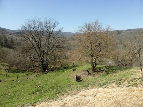 Chianti-Cashmere-geiten-kasjmier-Toscane (34)