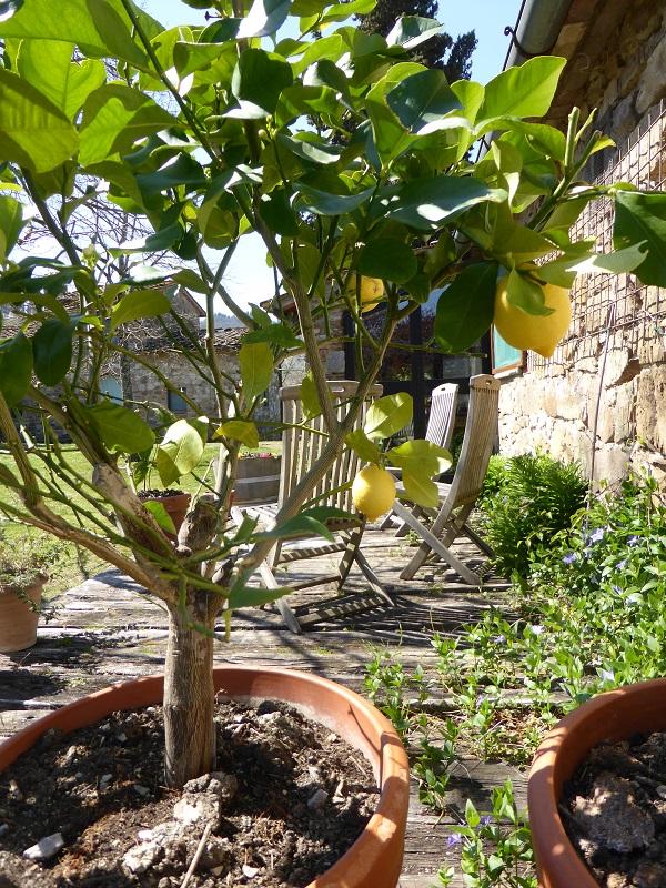 Chianti-Cashmere-geiten-kasjmier-Toscane-vakantiehuis (3)