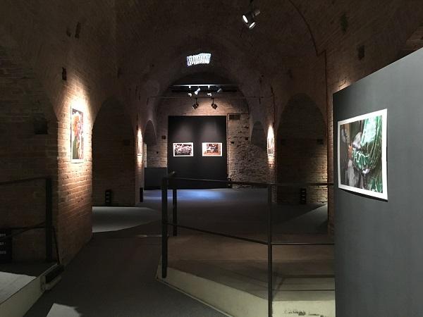 Il-Palio-dentro-Elisa-Lovati-Siena (5)