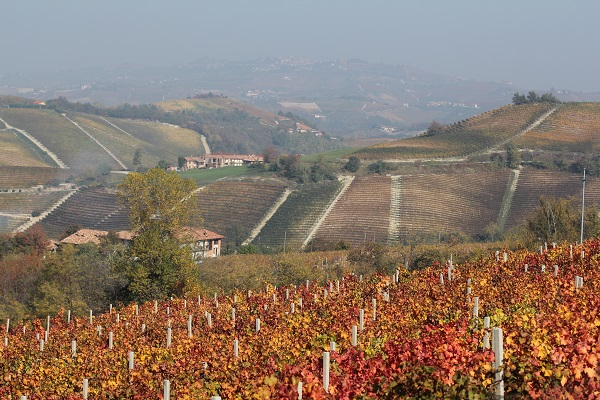Renato-Fenocchio-wijn-proeven-Piemonte (1)