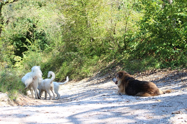 De 4 honden