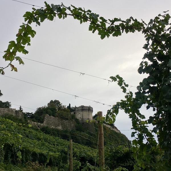 Festa-Opera-Brescia-vigneto-wijngaard (1)