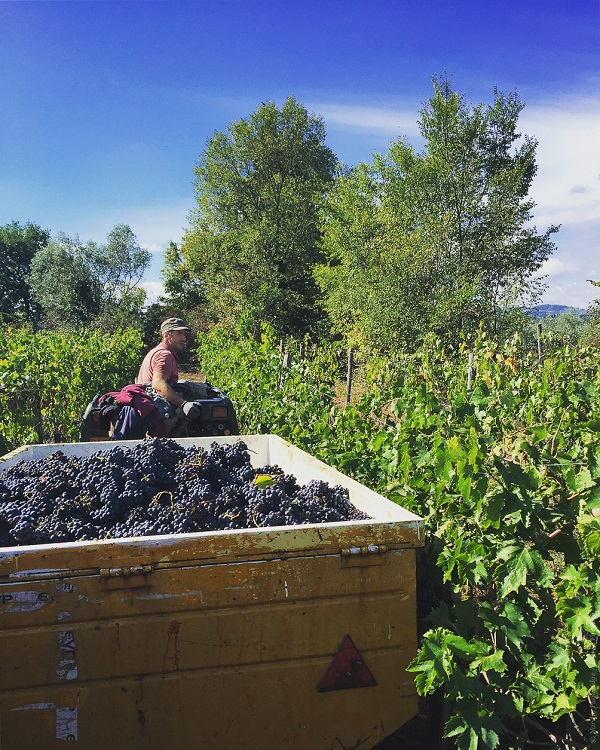 Lost_in_Florence_Nardia_Plumridge_Wine_Harvest-9