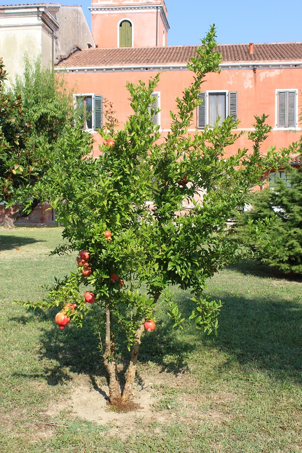 san-lazzaro-degli-armeni-venetie-14