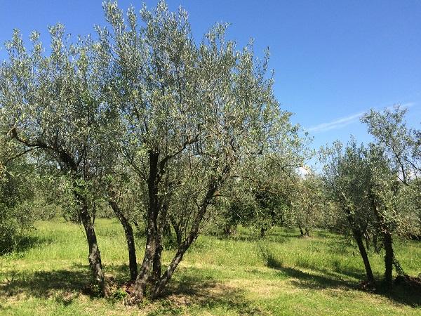 Villa-Medicea-di-Lilliano-Malenchini-wijn-Toscane (5)