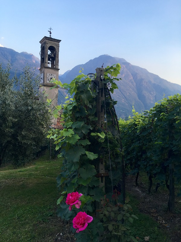 Wijngaard Cantine Bignotti in Piancogno in Valle Camonica