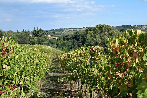 castell-arquato-la-mia-italia-6