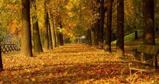 november-gedicht-italiaans-pascoli