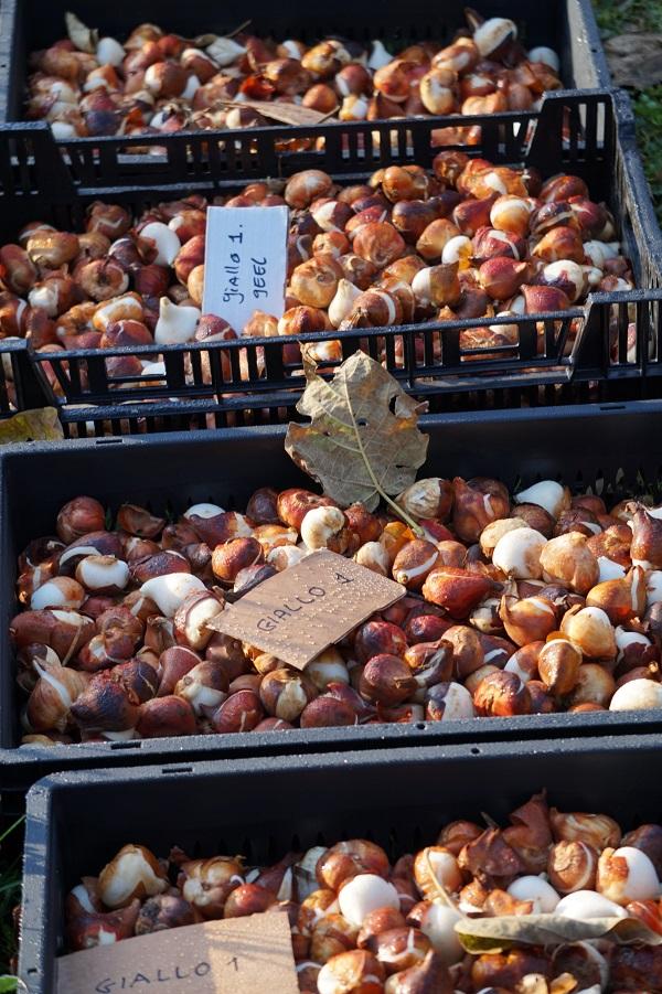 villa-pisani-tulpenbollen