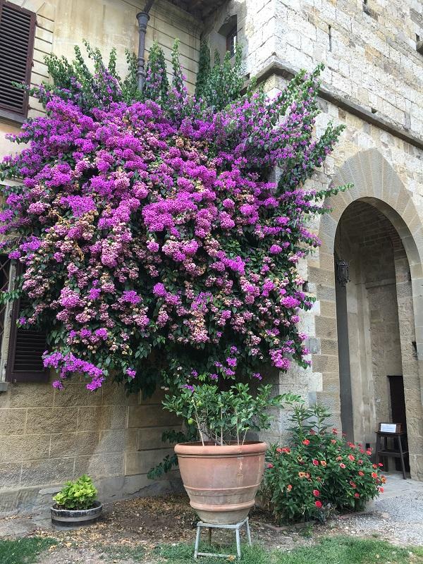 badia-passignano-chianti-toscane-9