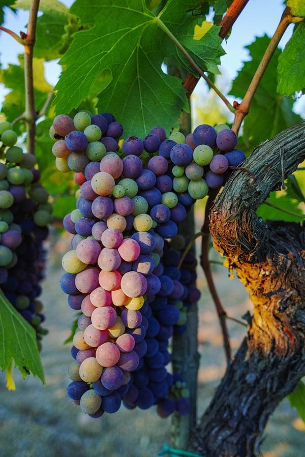 montepulciano-strada-vino-nobile-wijnroute-1