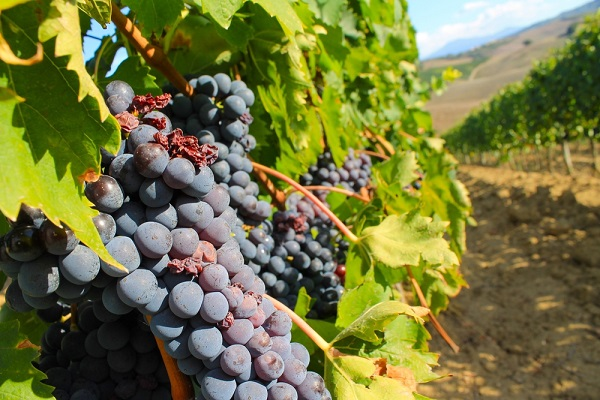montepulciano-strada-vino-nobile-wijnroute-4
