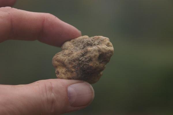 truffels-zoeken-piemonte-rik-rensen-4