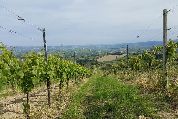 piceno-wijnen-le-marche-7
