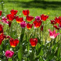 giardinissimo-de-mooiste-tuinen-van-italie-11