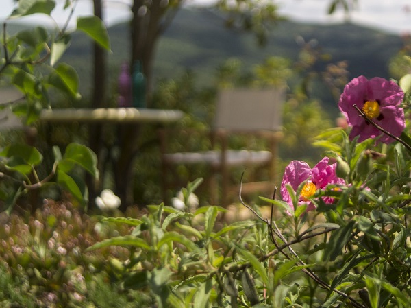 Het cre ren van een tuin in itali ciao tutti ontdekkingsblog door itali - Creeren van een tuin allee ...