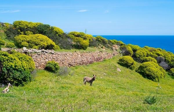 Asinara-Sardinië (15)
