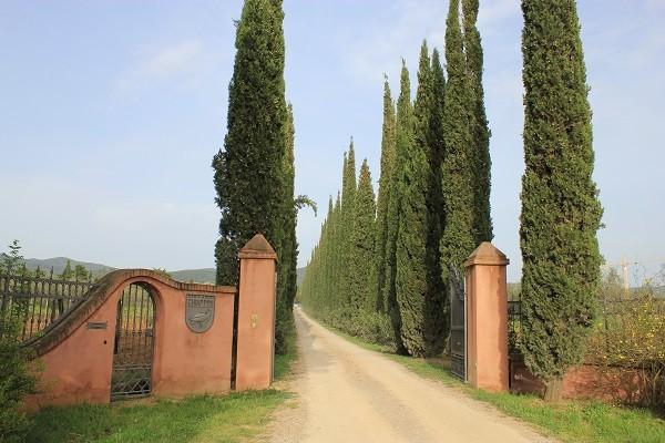 Azienda-Agricola-Chiappini-Bolgheri-Toscane (1)