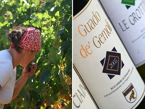Azienda-Agricola-Chiappini-Bolgheri-Toscane (14)