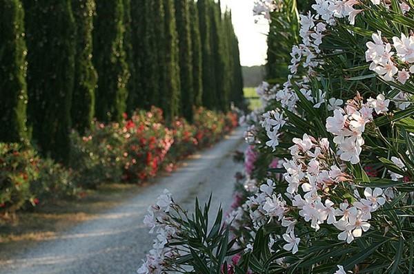 Azienda-Agricola-Chiappini-Bolgheri-Toscane (16)