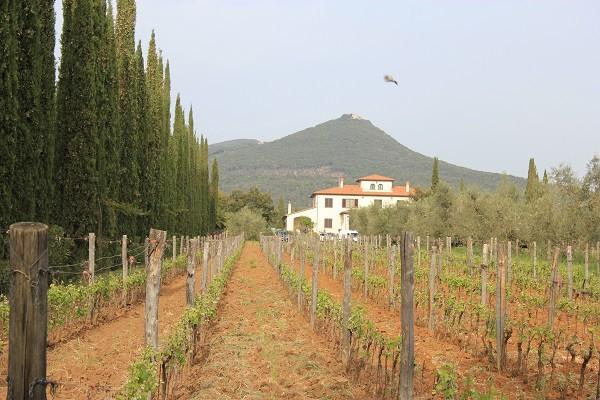 Azienda-Agricola-Chiappini-Bolgheri-Toscane (2)