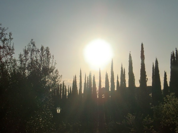 Azienda-Agricola-Chiappini-Bolgheri-Toscane (23)