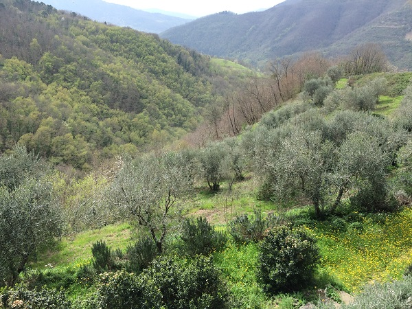 Azienda-Agricola-Frascole-Toscane (13)