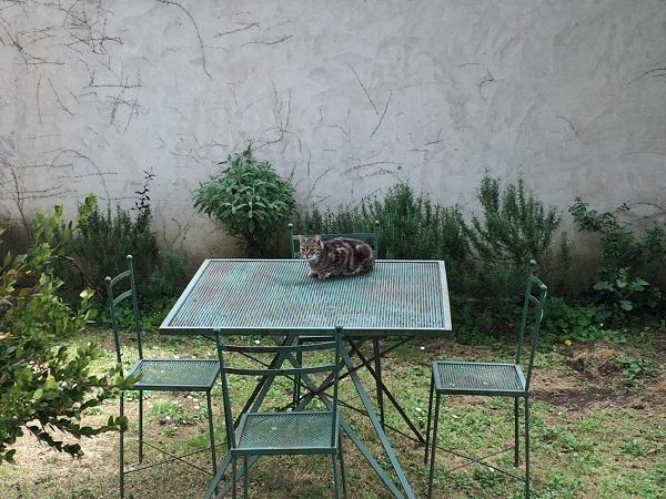Azienda-Agricola-Frascole-Toscane (15)