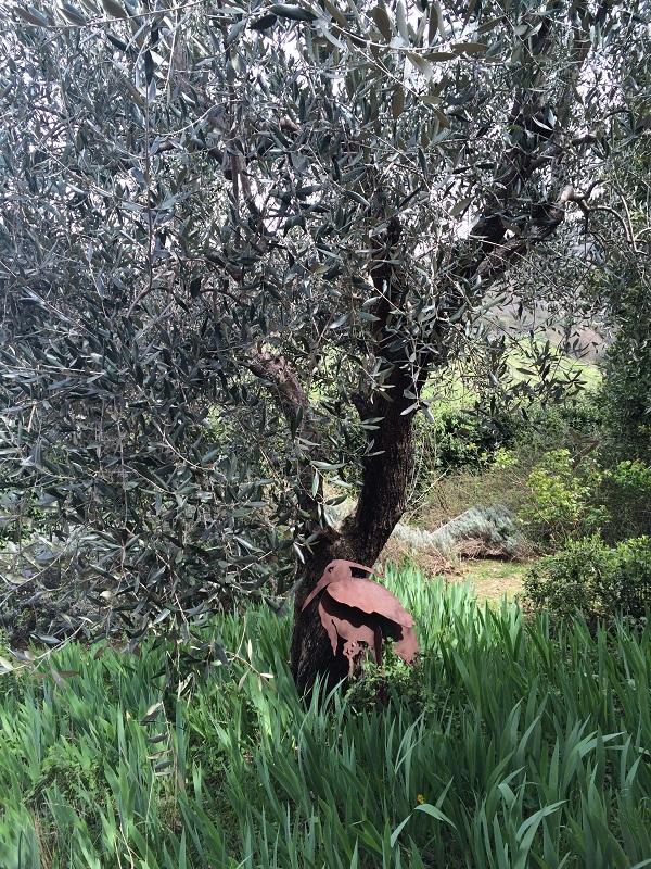 Azienda-Agricola-Frascole-Toscane (20)