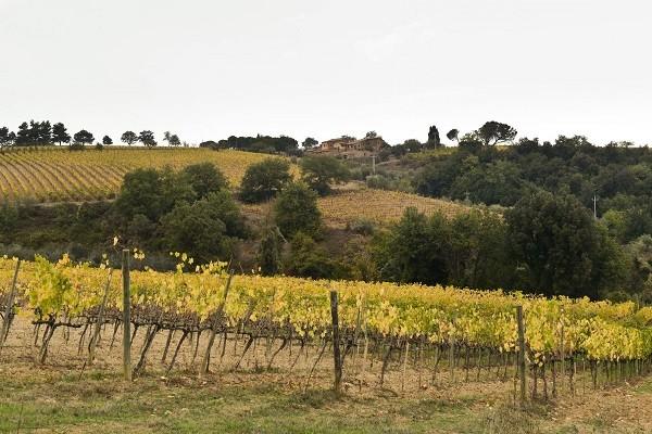 Azienda-Agricola-Scopone-Montalcino-Toscane (1)