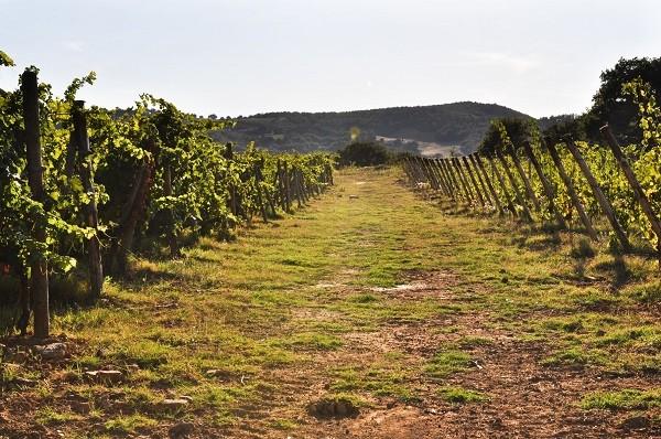 Azienda-Agricola-Scopone-Montalcino-Toscane (4)