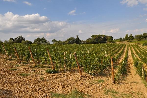 Azienda-Agricola-Scopone-Montalcino-Toscane (5)