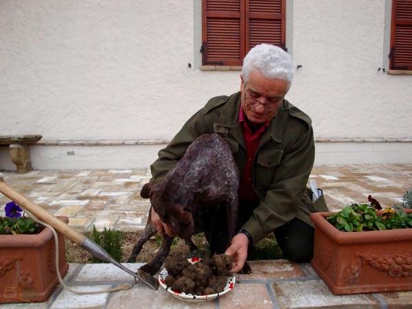 B&B-Il-Tartufo-Perugia-Bruno-truffel-hond (2)
