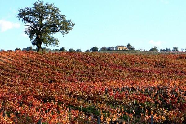 Baracchi-wijn-Cortona-Toscane (2)