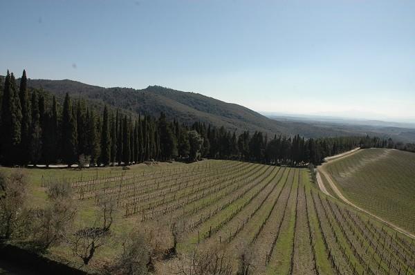 Baracchi-wijn-Cortona-Toscane (5)
