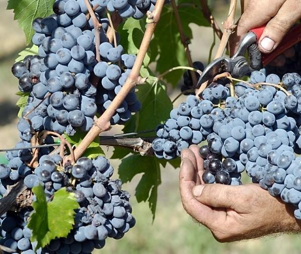 Baracchi-wijn-Cortona-Toscane (7)