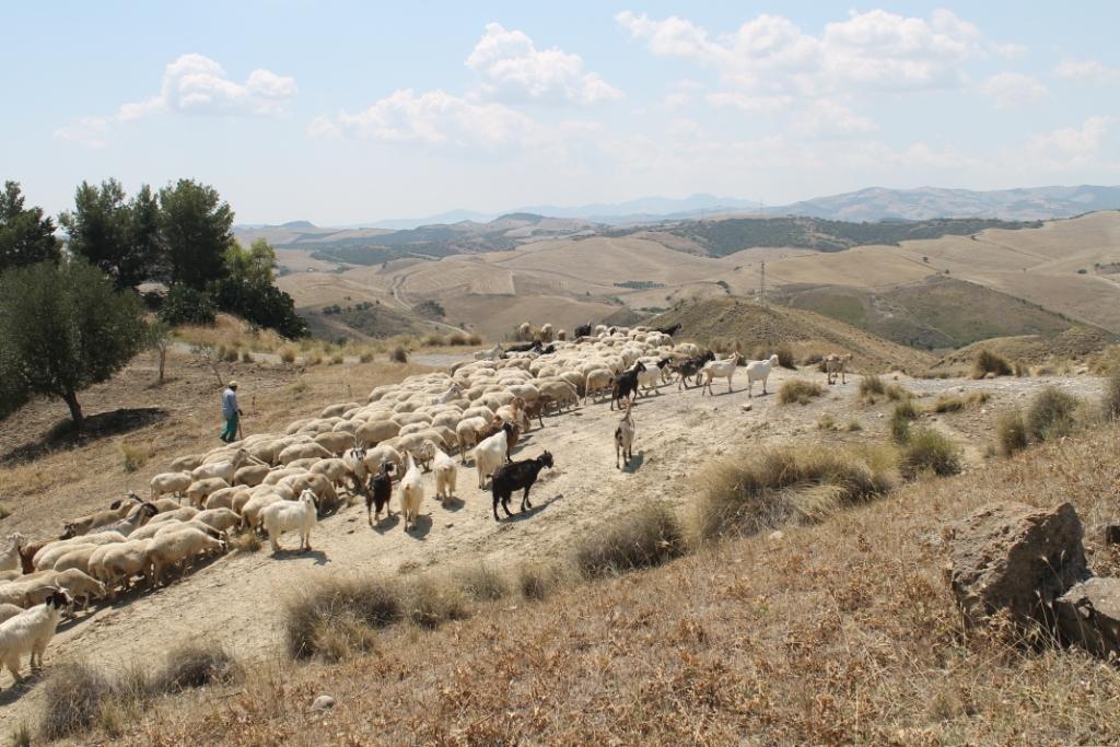 Basilicata-kudde