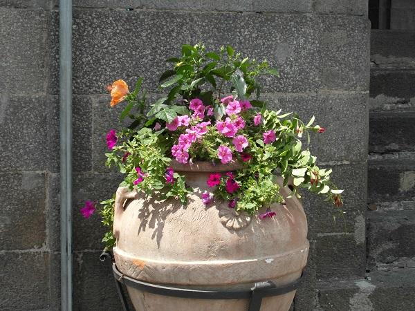 Bisconti-Italië-tuinieren-in-een-pot (1)