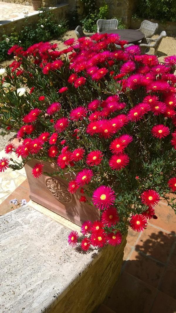 Bisconti-Italië-tuinieren-in-een-pot (3)